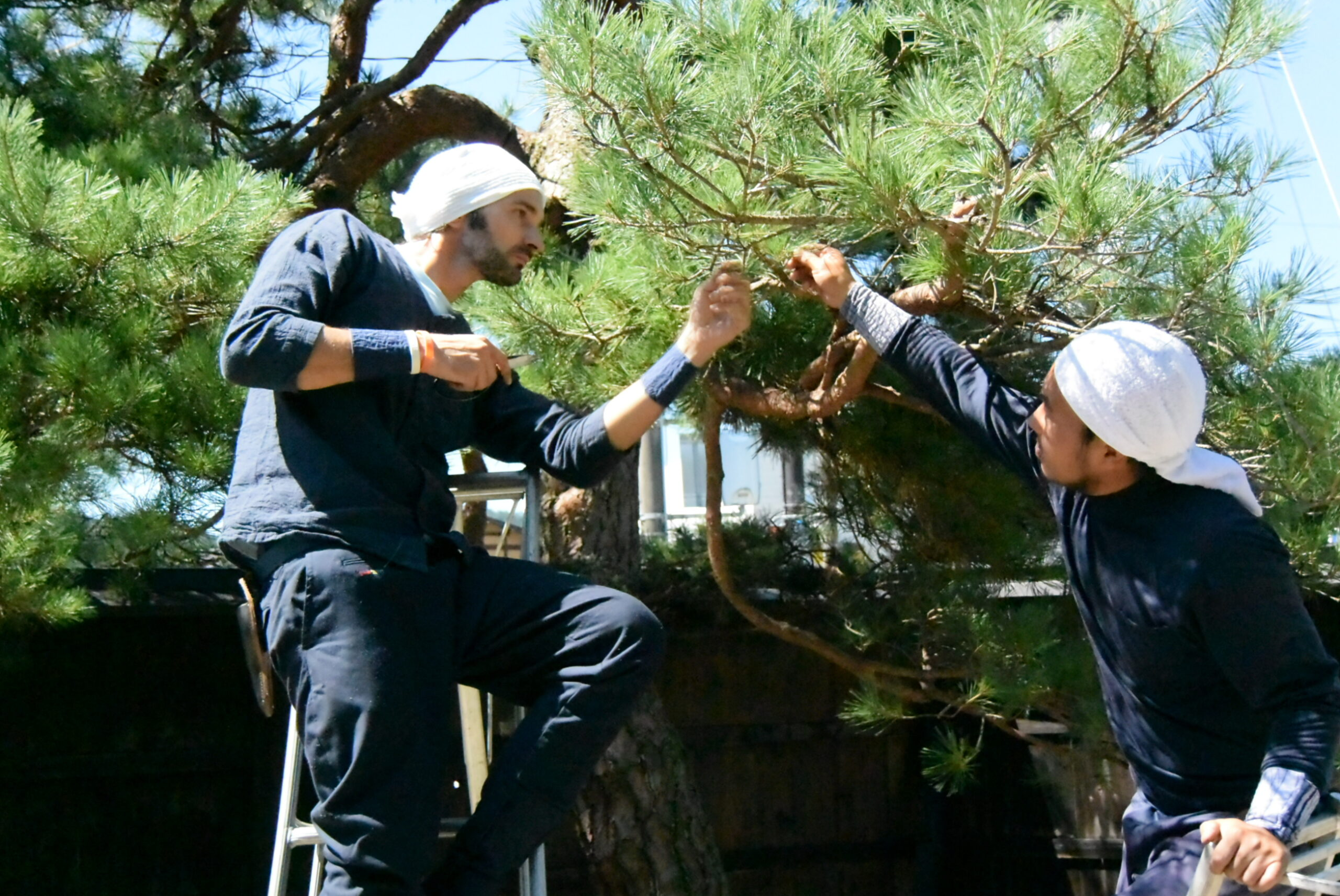Japanese Gardener Experience